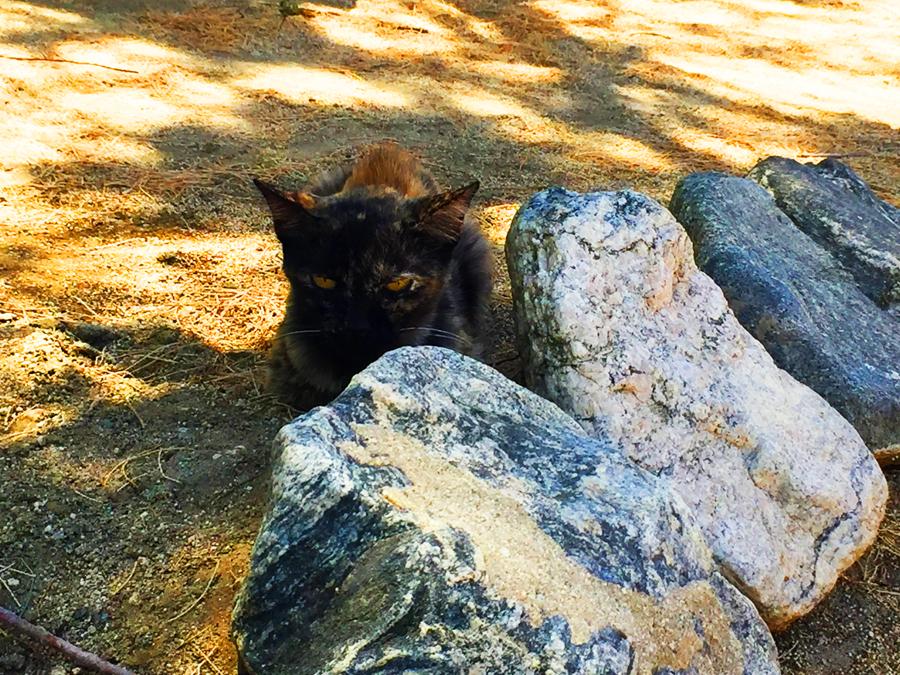 Tortee cat in the garden