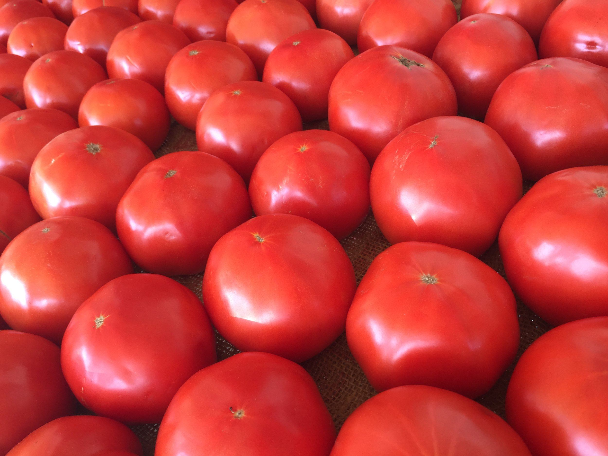 Gorgeous beefsteak tomatoes at a local farm