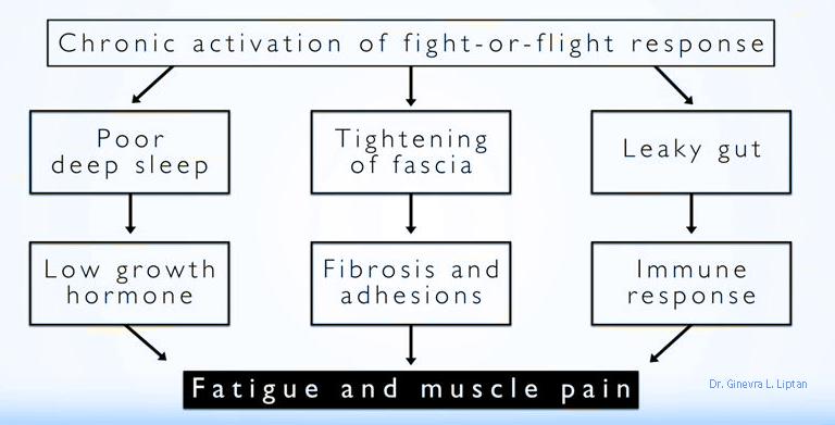 dr-liptan-fibro-diagram.png