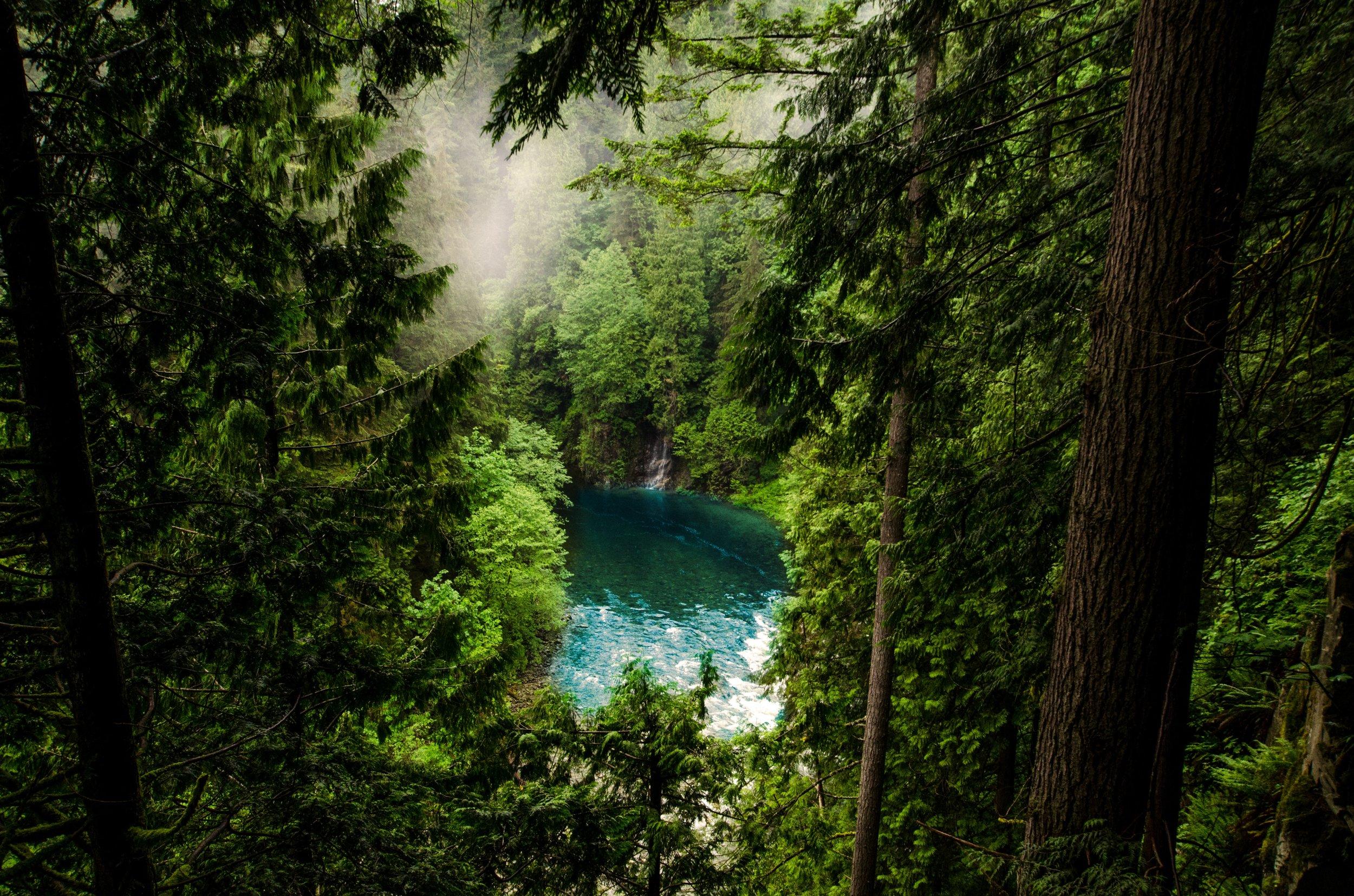 conifer-daylight-evergreen-632280.jpg