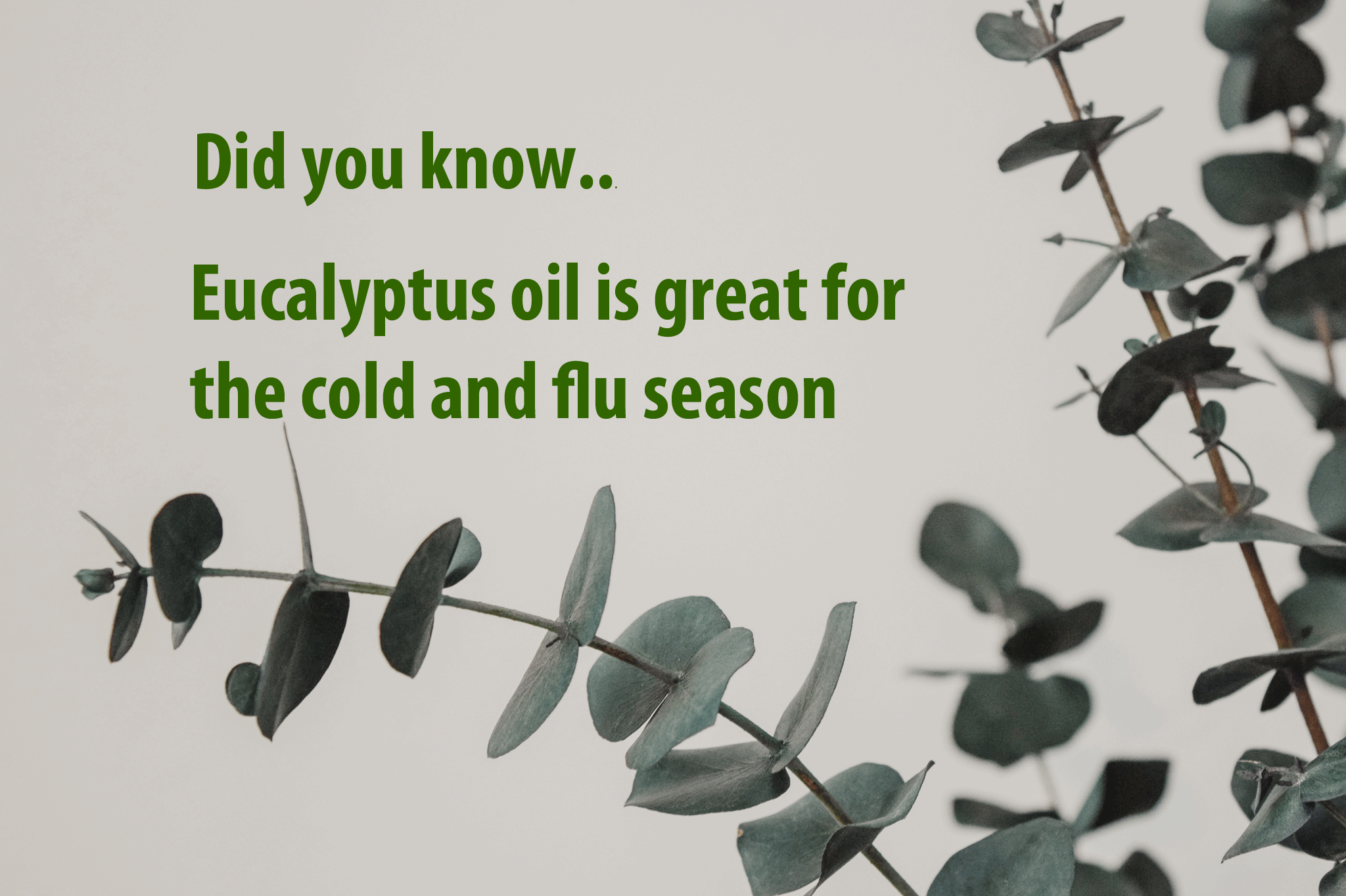 eucalyptus-oil-bodysoulsynergetics.png