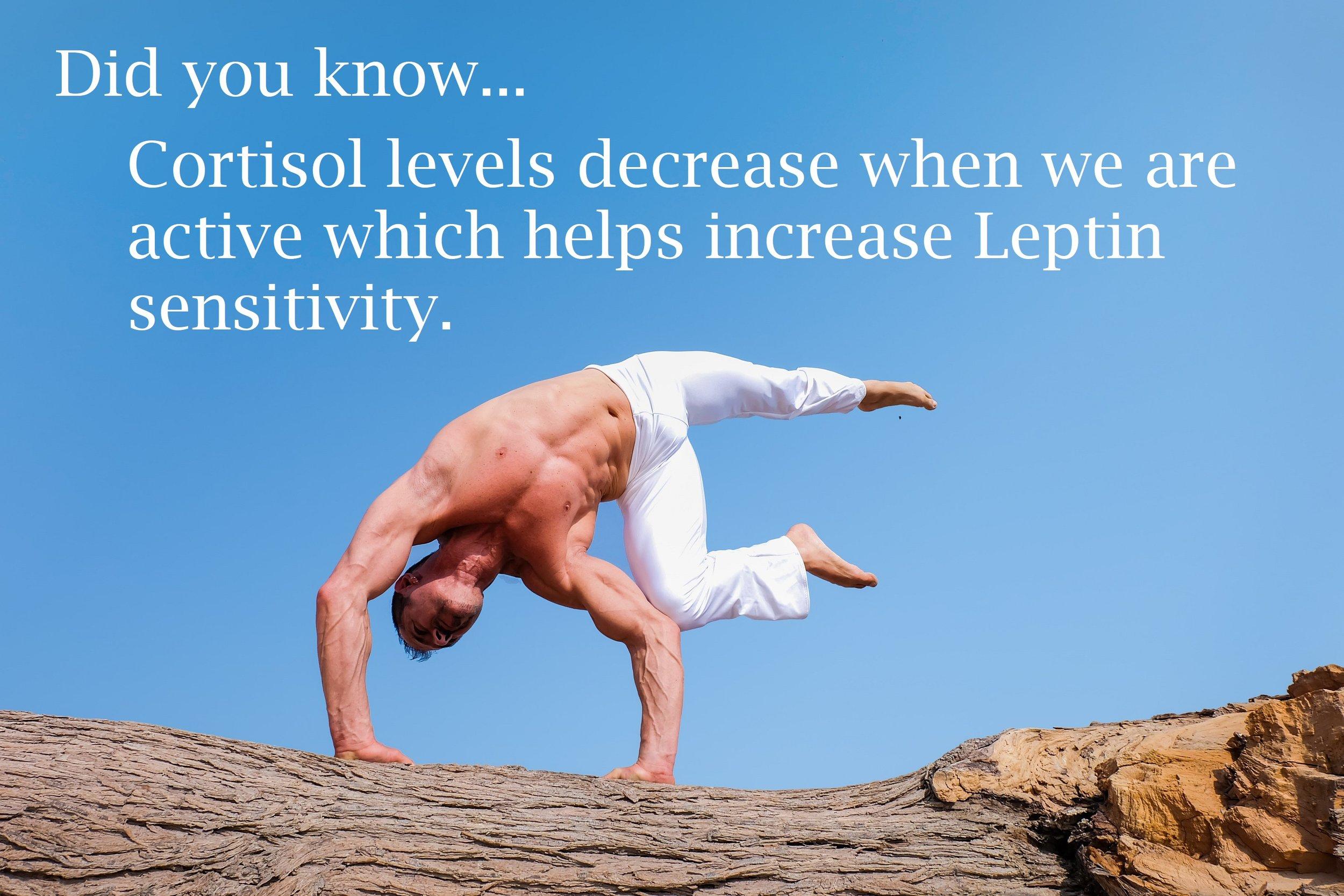 Cortisol levels.jpg