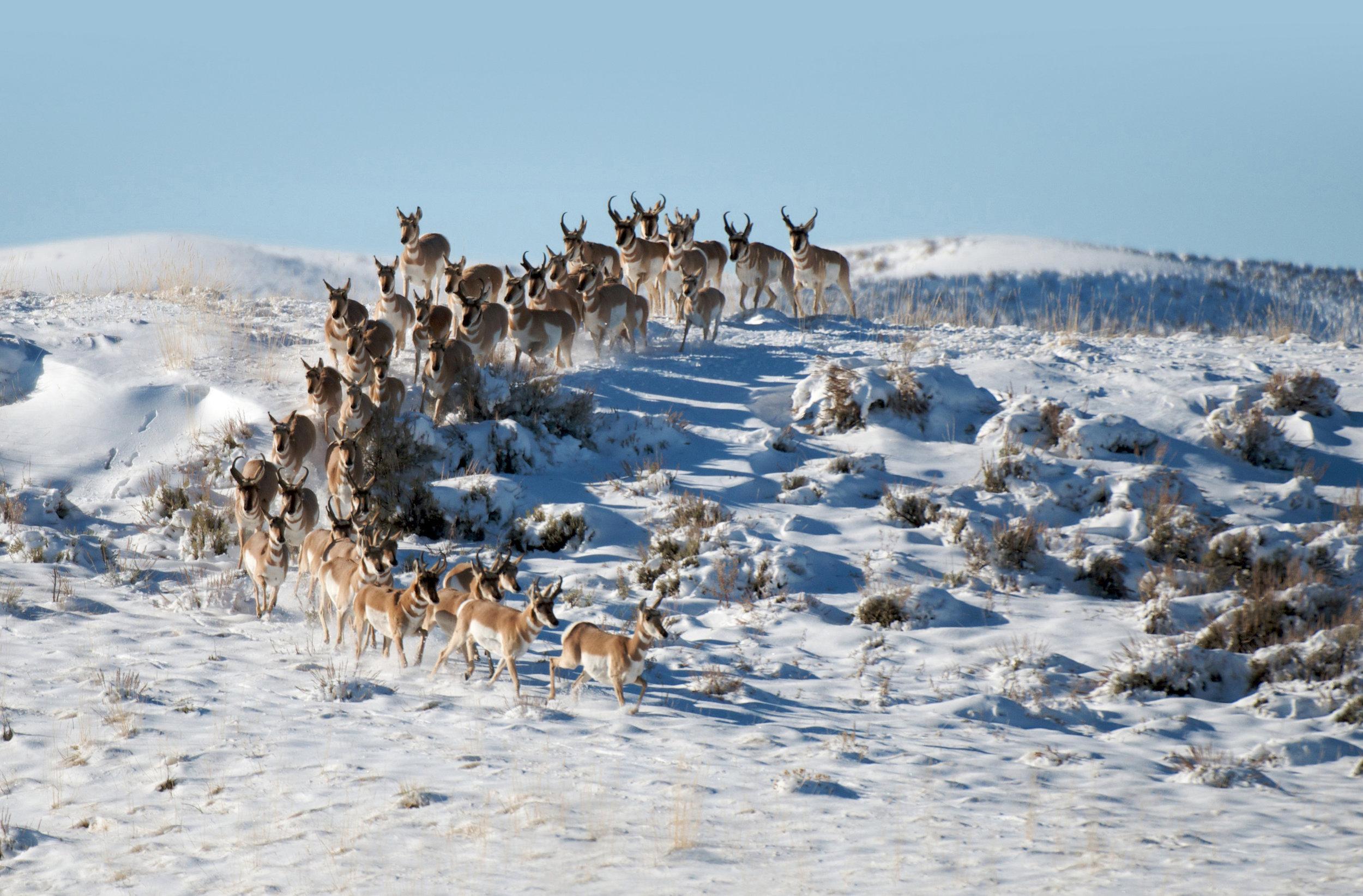 Reindeer_new.jpg