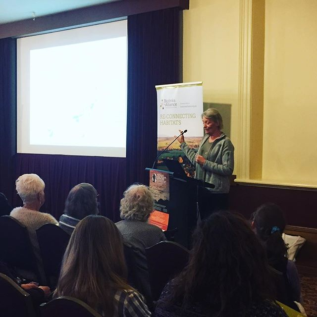 Dr Peggy Eby shares the research that links habitat destruction in Queensland to the arrival of Flying Foxes in Bendigo. #connectandprotect #communityconservation #flyingfoxes #landscapeconservation