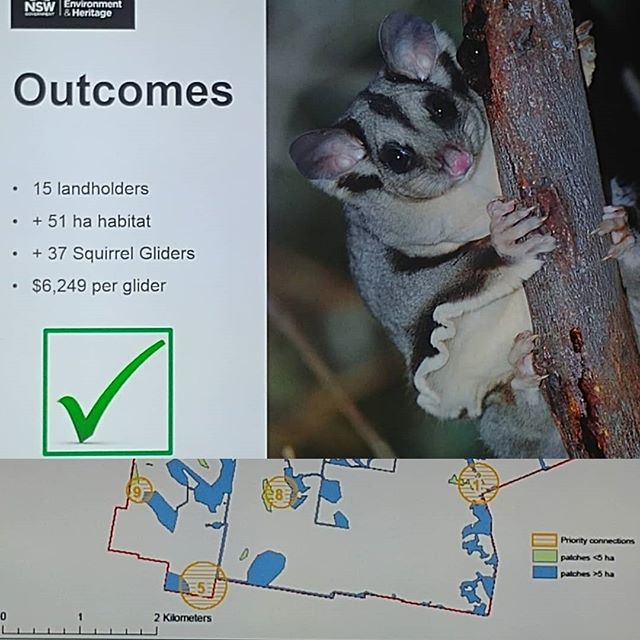Today I had the fortune to hear about the Squirrel Glider LAMP project in Burrumbuttock... survey + community action + priority map = way forward for saving threatened species whose ranges happen to be mainly on farmland. Amazing people and work.. https://www.wirraminna.org.au/petaurus/squirrel-glider-lamp/