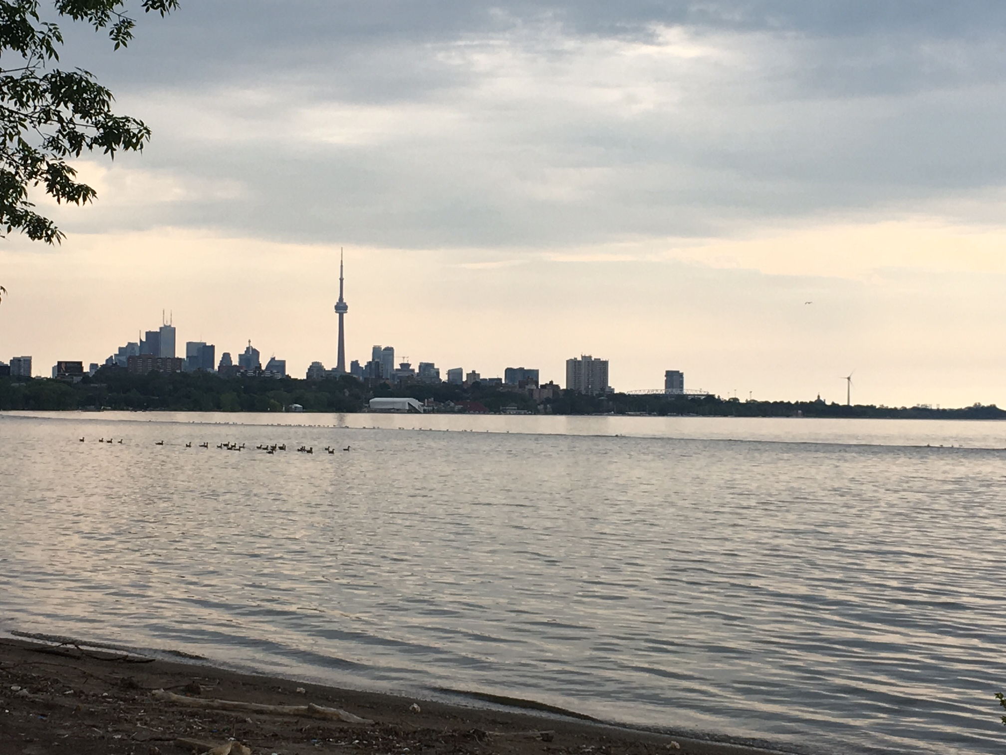 City skyline.   Still in the West End, looking east towards the city over Lake Ontario. People take their dogs swimming here.
