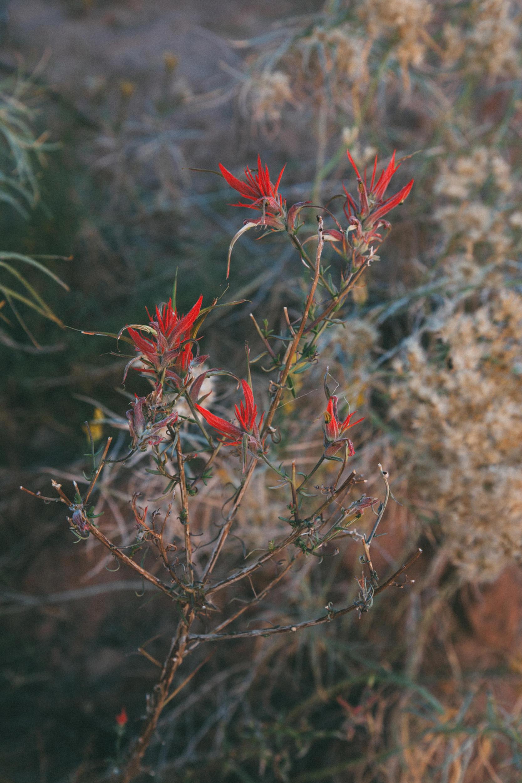 AoC-Desert-SycamoreCo-web-3.jpg