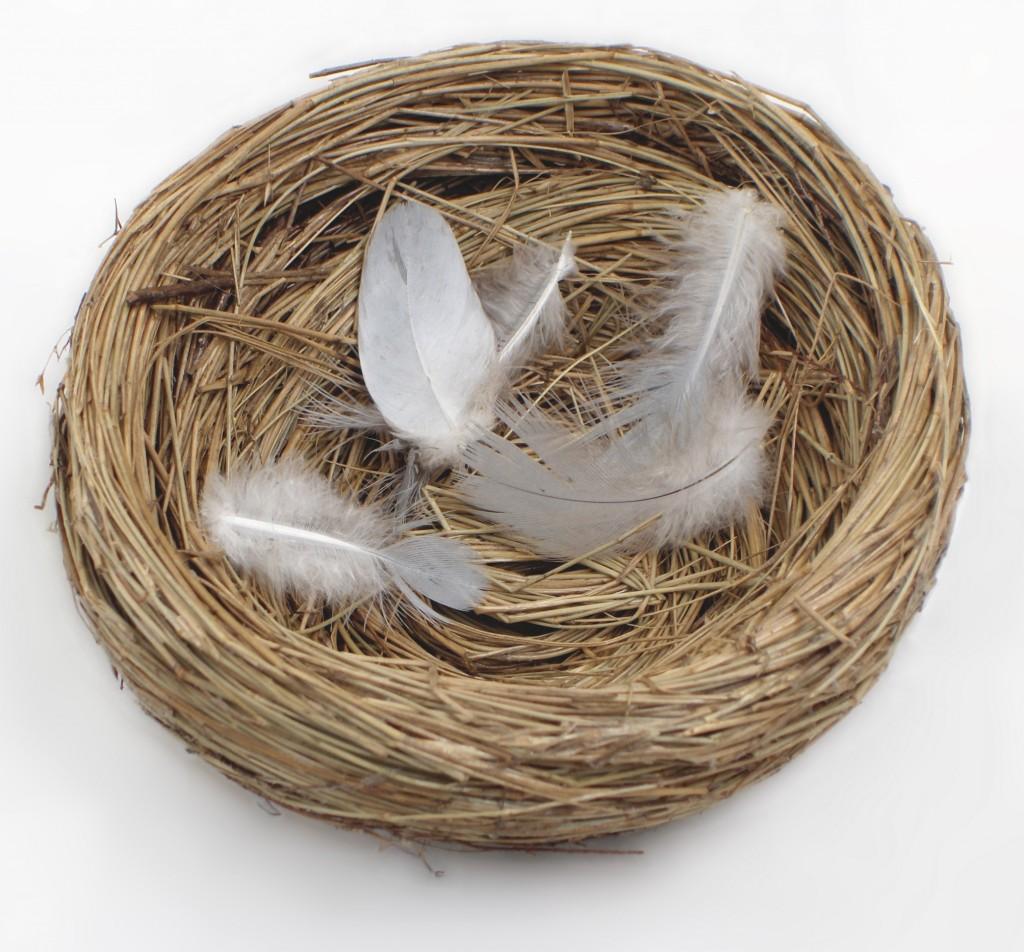 empty-nest-1024x952.jpg
