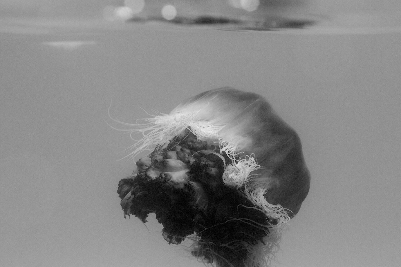 01 Jellyfish. Photographer Digby Ayton.jpg