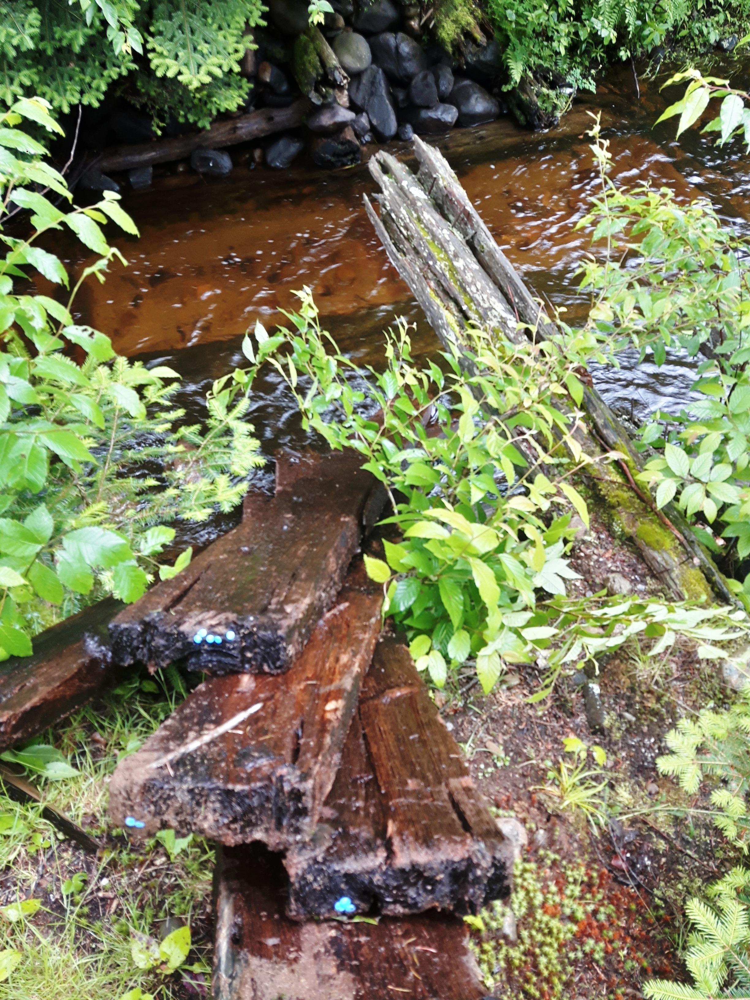 les-bois-d'eau 37.jpg