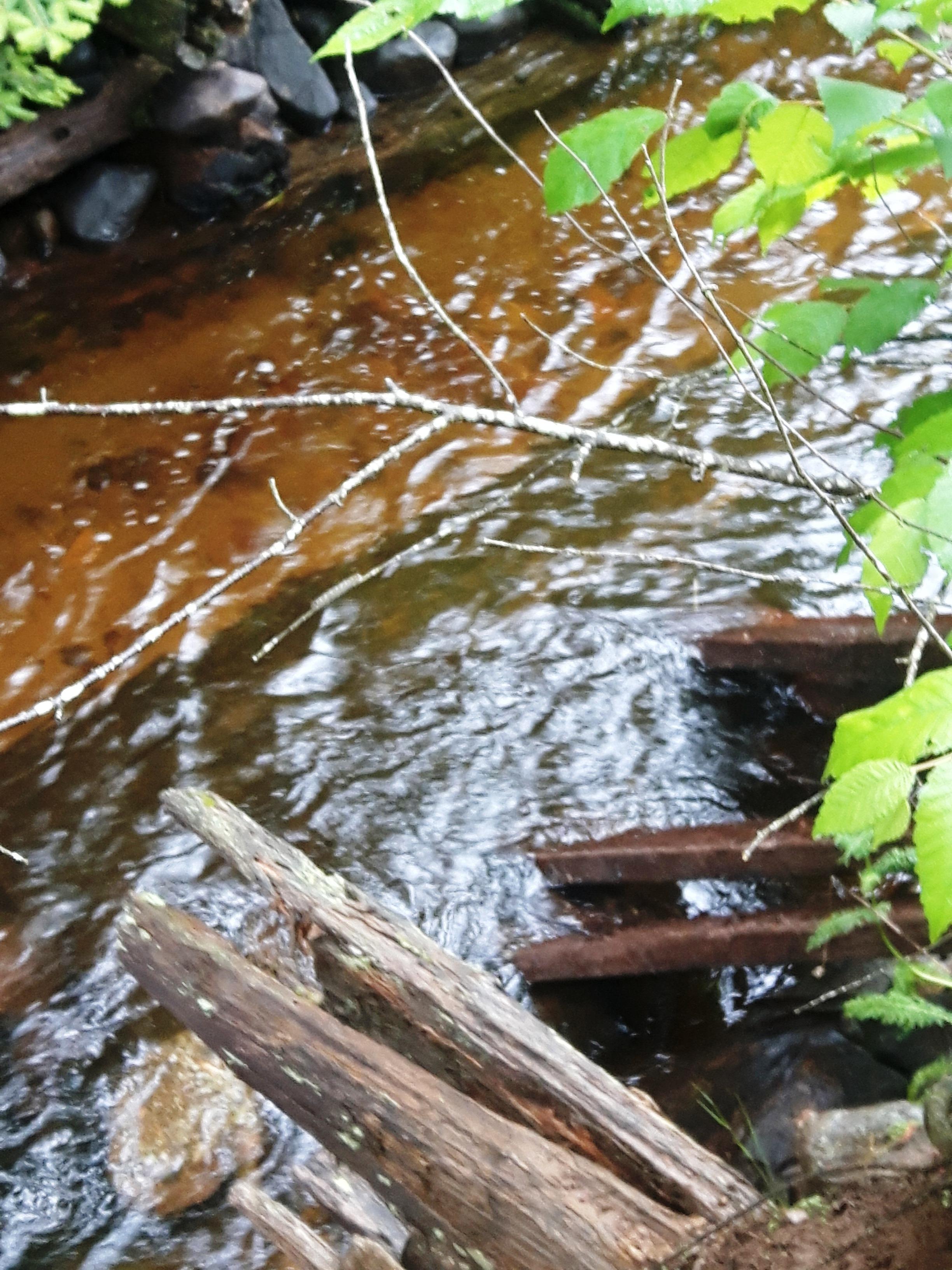 les-bois-d'eau 39.jpg