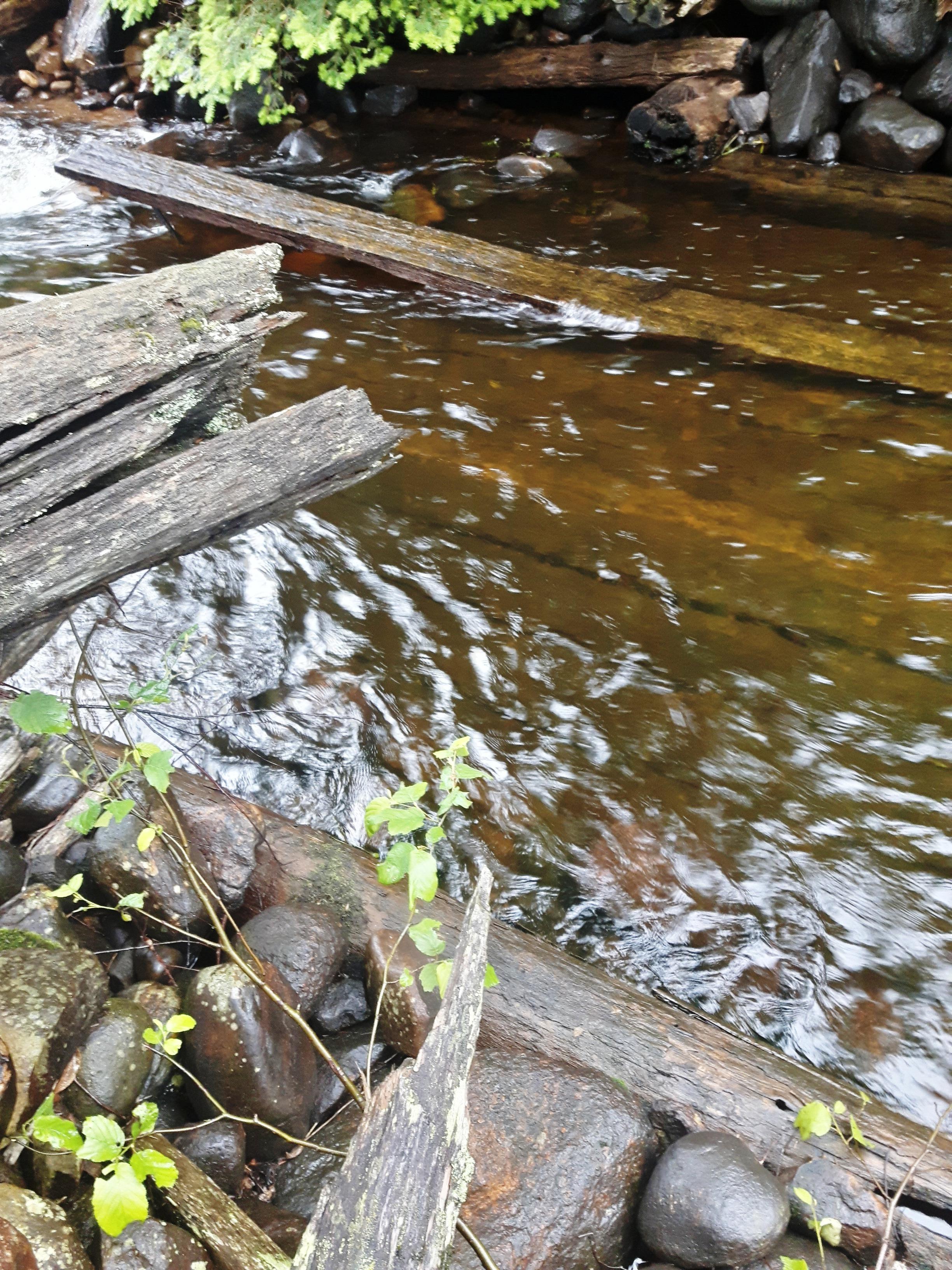 les-bois-d'eau 14.jpg