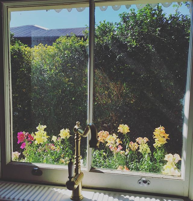 Window box game strong 🌷🌻🌹 #brisbanehomes #brisbane #homedecor #stylist #queenslandhomes #queenslander #chinoiserie #whitehouse  #homedecor #interiordesign #brisbanestylist #brisbaneinteriordesigner #kitchen #floral #flora #kitcheninspo #windowflowerbox #wednesday #snapdragons