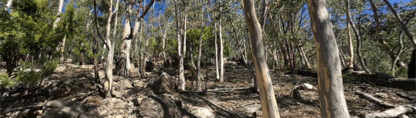 Click image to view Photosphere:  The Tip Top mountain bike track to be built-over