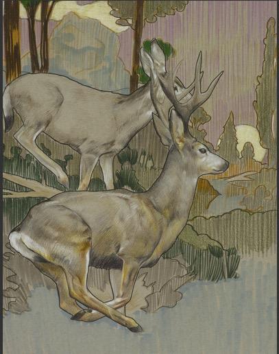 Mule Deer Mixed Media on Paper