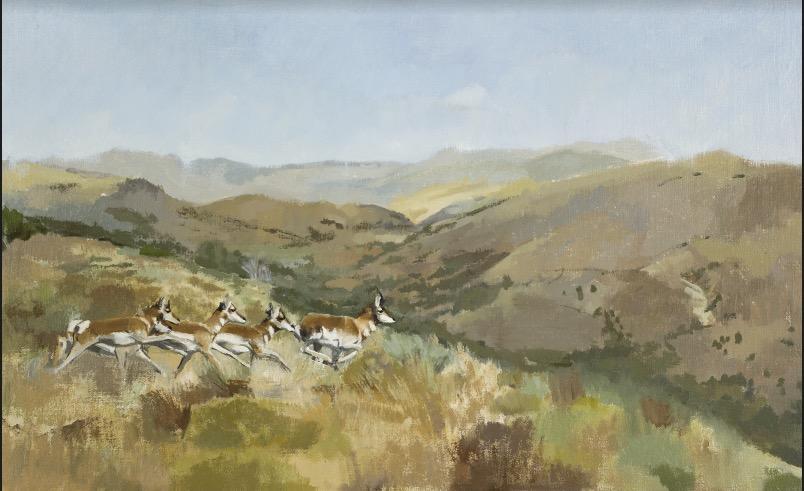 Pronghorn Running Oil on Linen