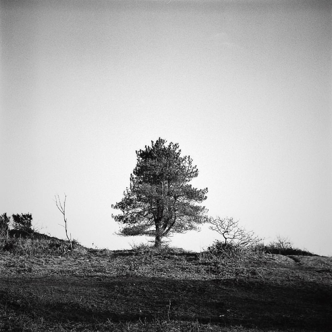 In love with #MediumFormat at the moment.