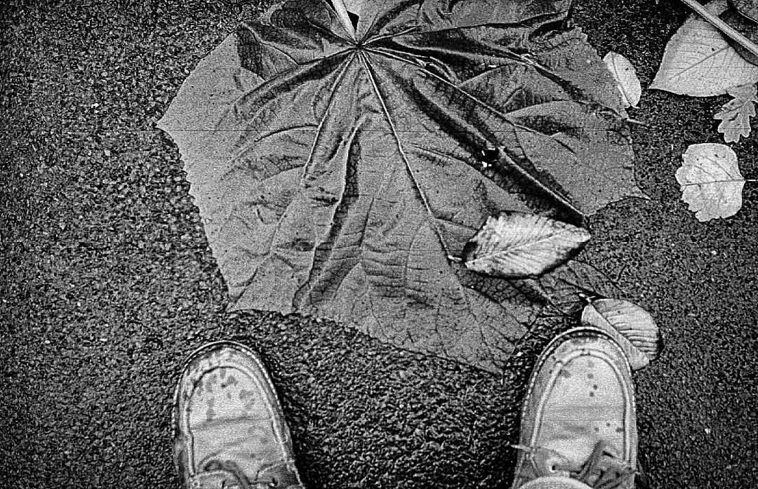 Sometimes street photography is about nuance and emotion. And sometimes it's about finding a really big leaf. Size 11 boots for scale. Shot to #film on my 1938 #Leica.