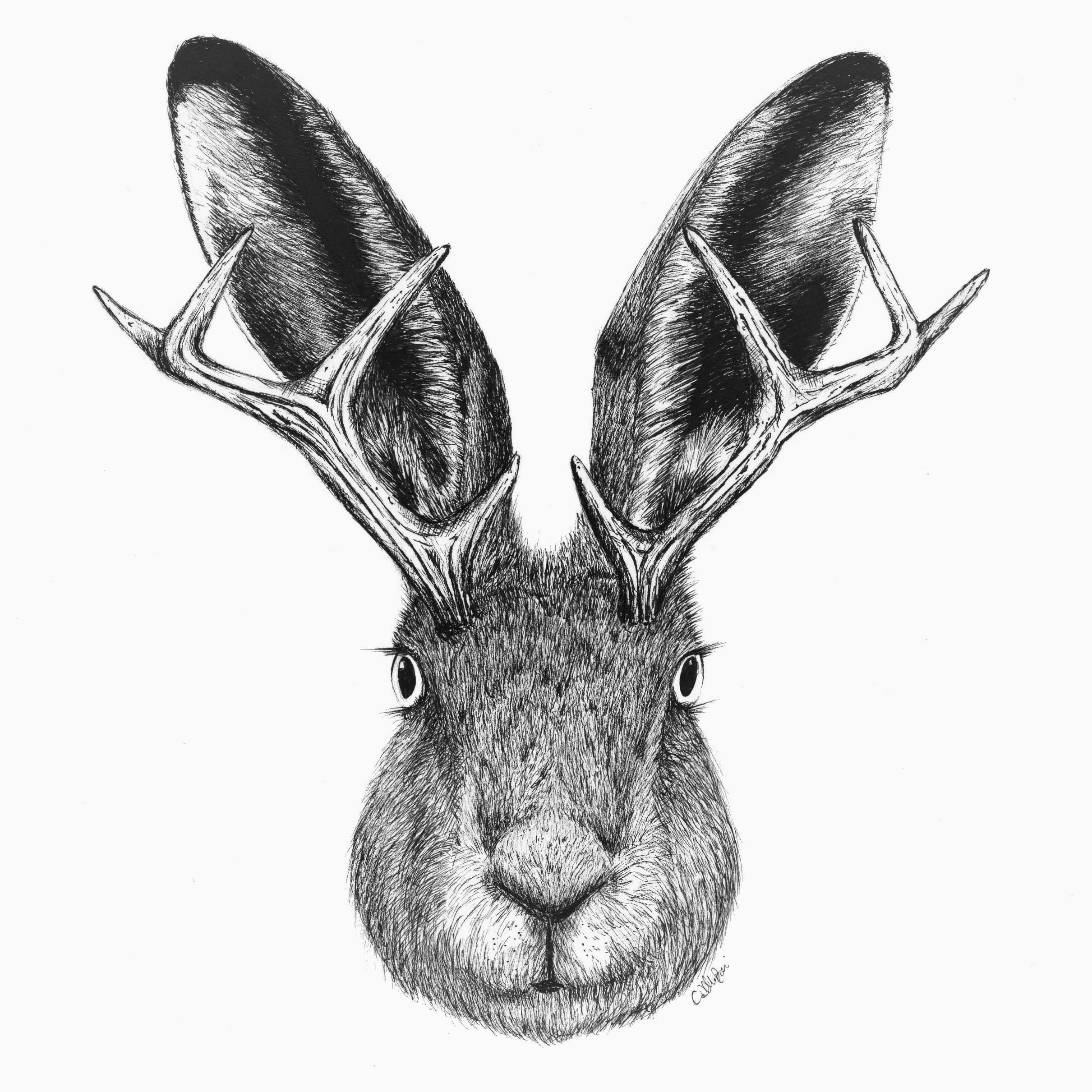 Jackalope Sticker.jpg