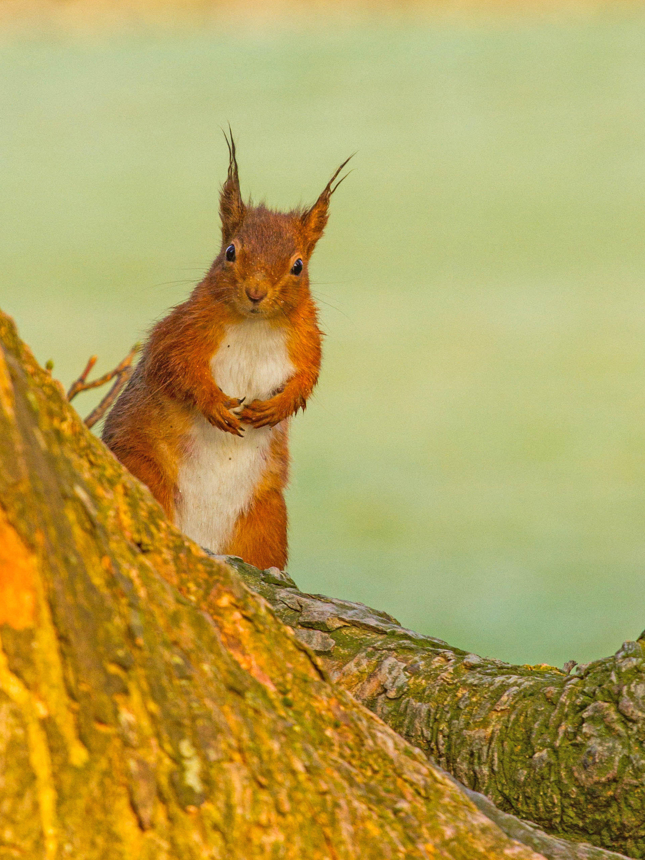 Buttermere Squirrel