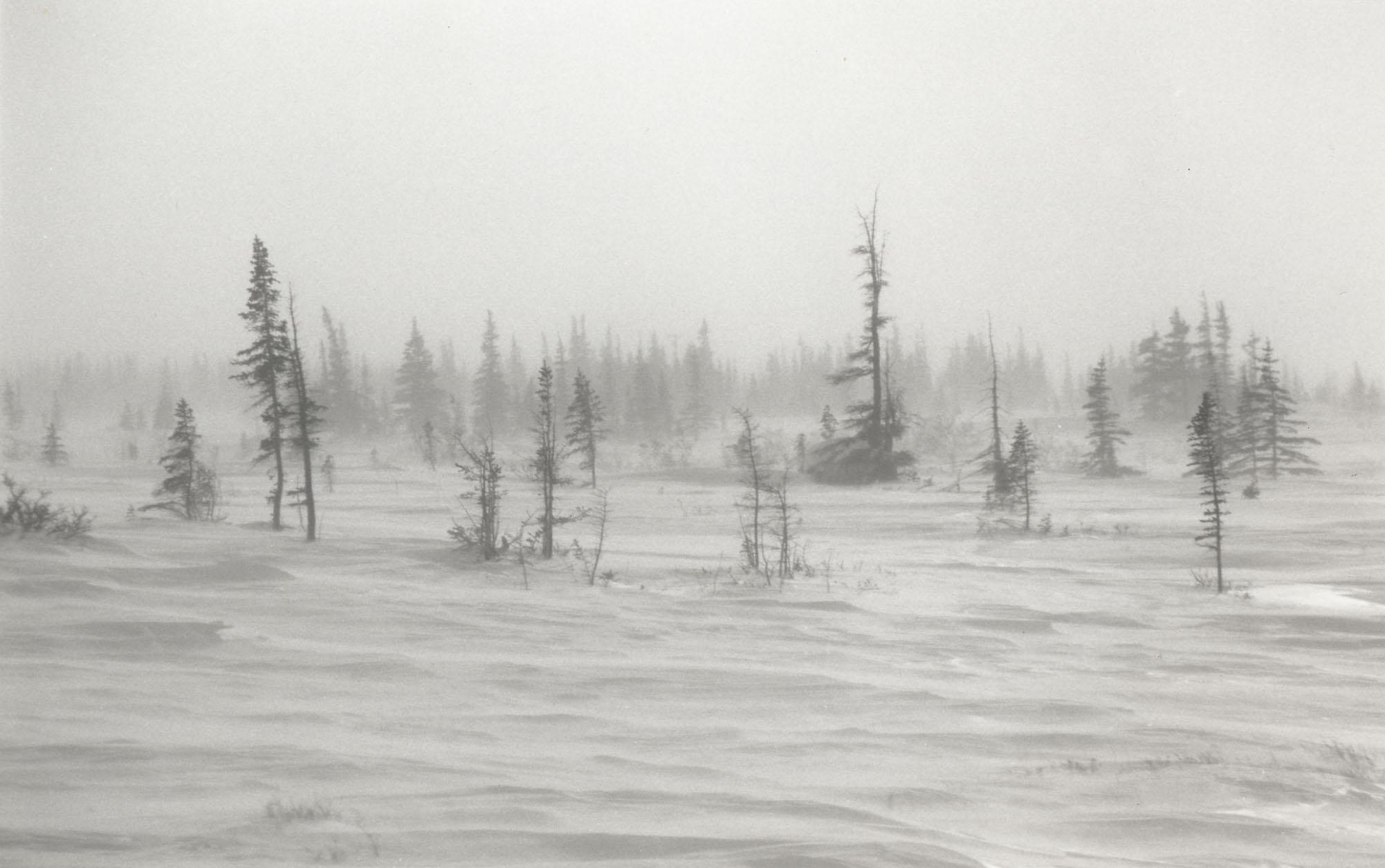 POL_Landscape_trees.jpg