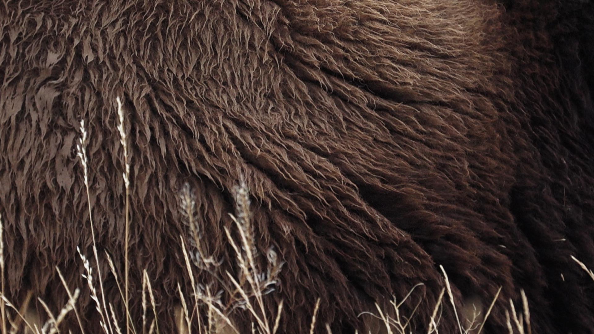 BA_Buffalo Fur.jpg