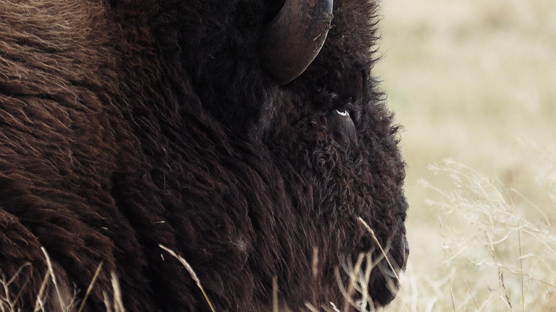 63505 Buffalo Side.jpg