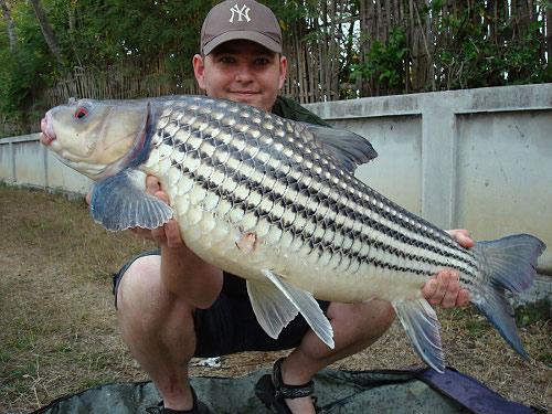 golden_price_carp_fishing_in_thailand.jpg