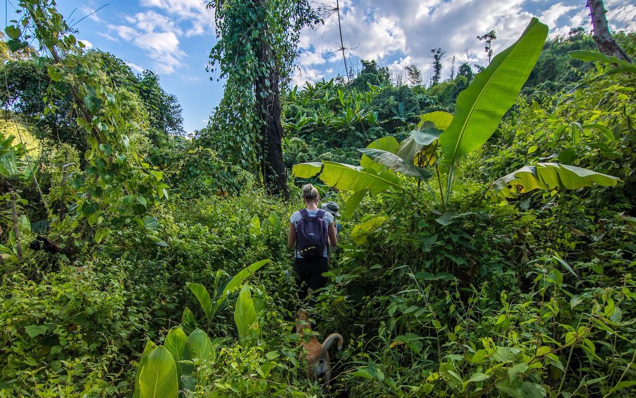 Trekking-through-the-jungle.jpg
