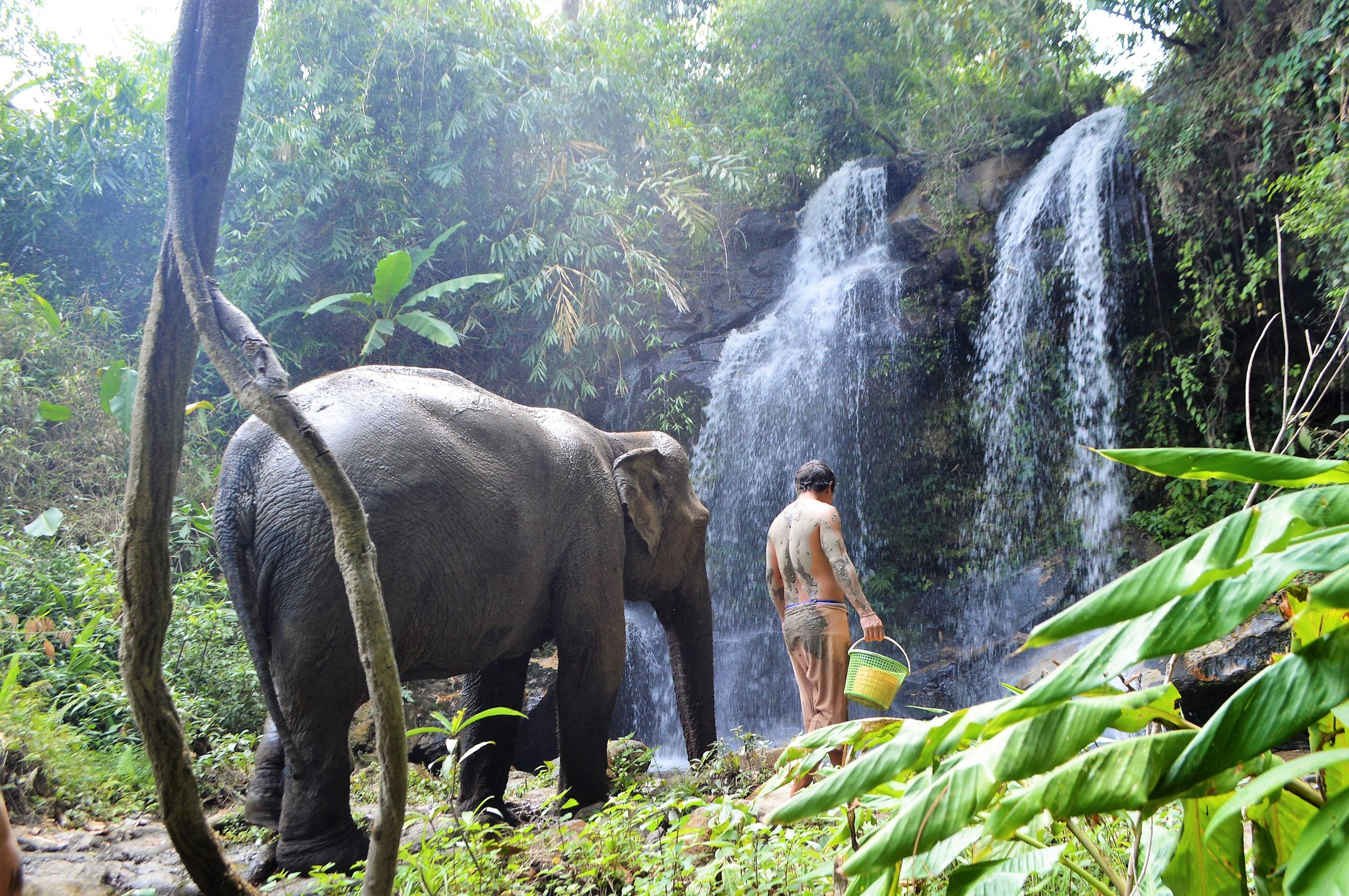 Chiangmai Elephant Land 1.jpg