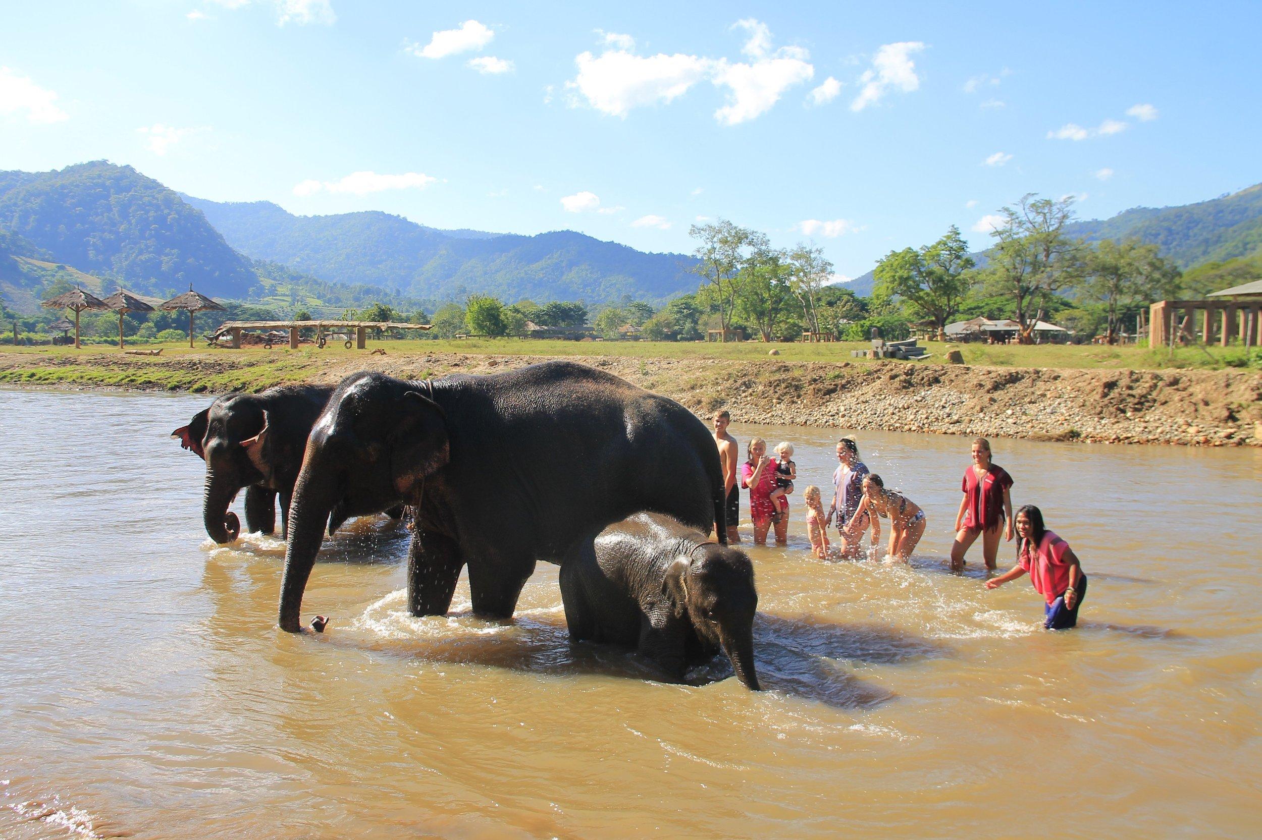 Happy Elephant Home tripadvisor.jpg