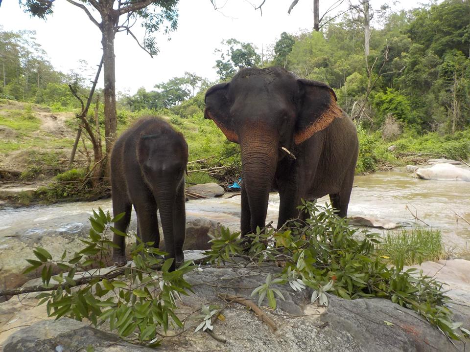 Mother and baby elephant at Into the Wild Elephant Camp.jpg