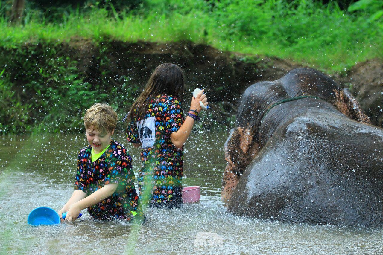 Kanta.Elephant (2).jpeg