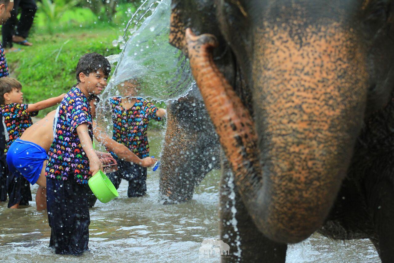 Kanta.Elephant (36).jpeg