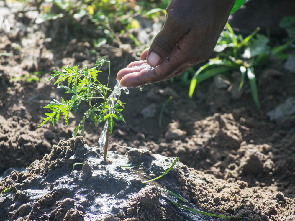 A Healthy Legacy - As we use resources to serve our customers, Hi-Tech is invested in leaving resources for future generations. We've partnered with One Tree Planted to plant 1,200 trees every year. Your purchase is good for you and this Earth.