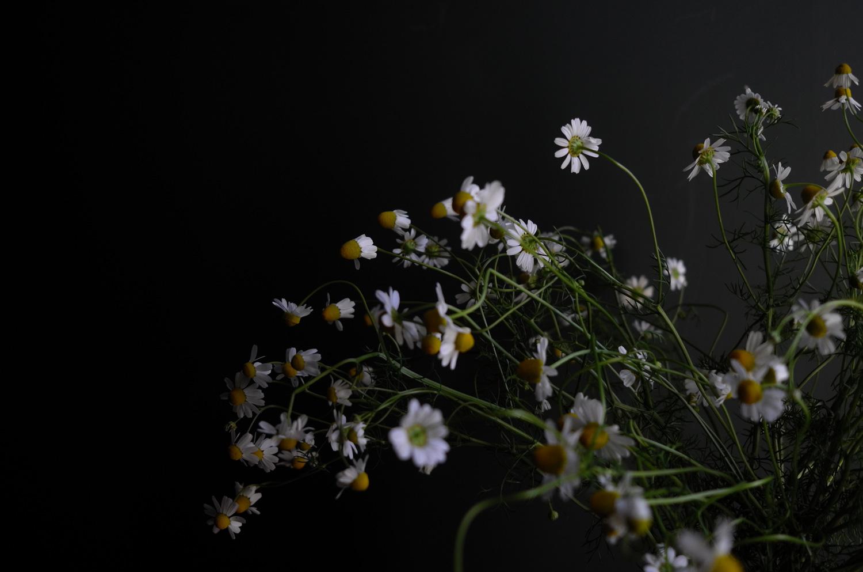 VASES/Celebration - chamomile dancing
