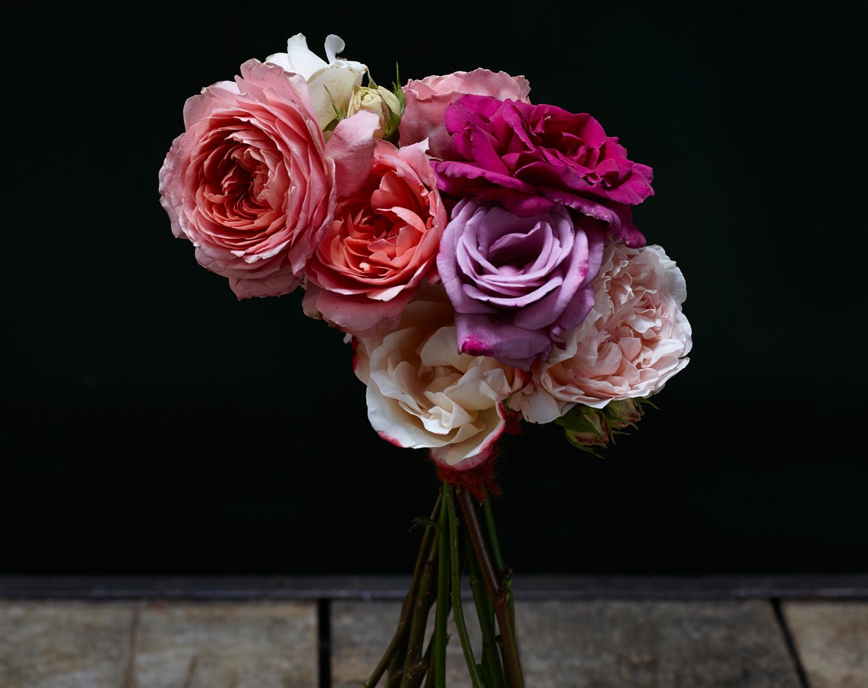 ROSES FOR ROSIE/celebration