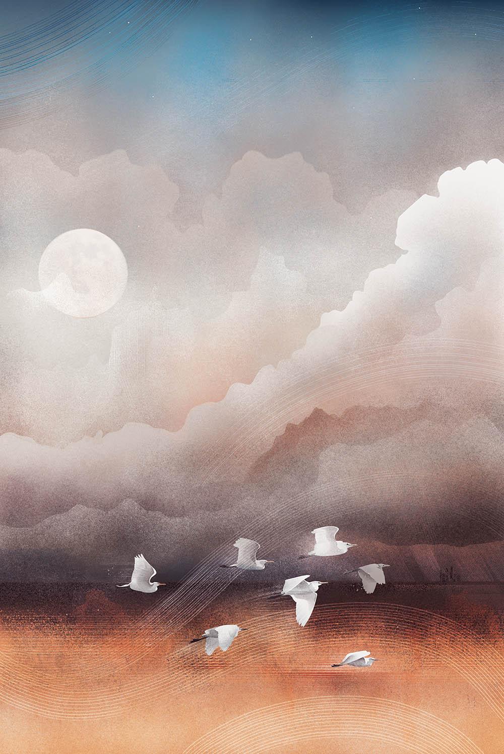 karla_sanders_white_birds_illustration.jpg