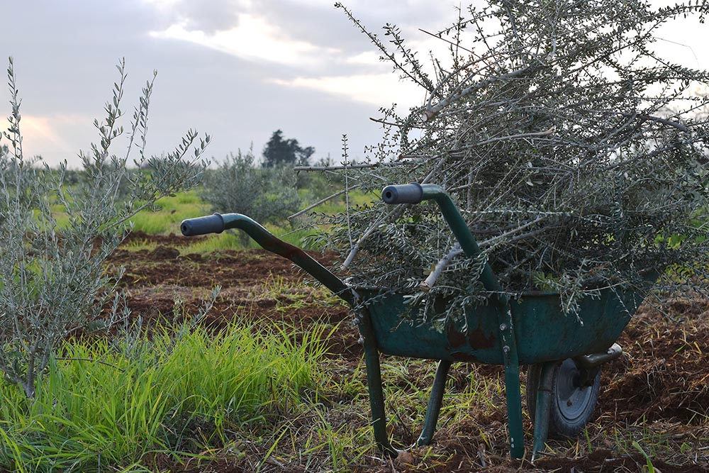 Garden_of_Cyprus_work.jpg