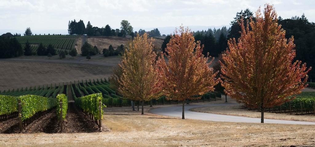 Oregon-XL.jpg