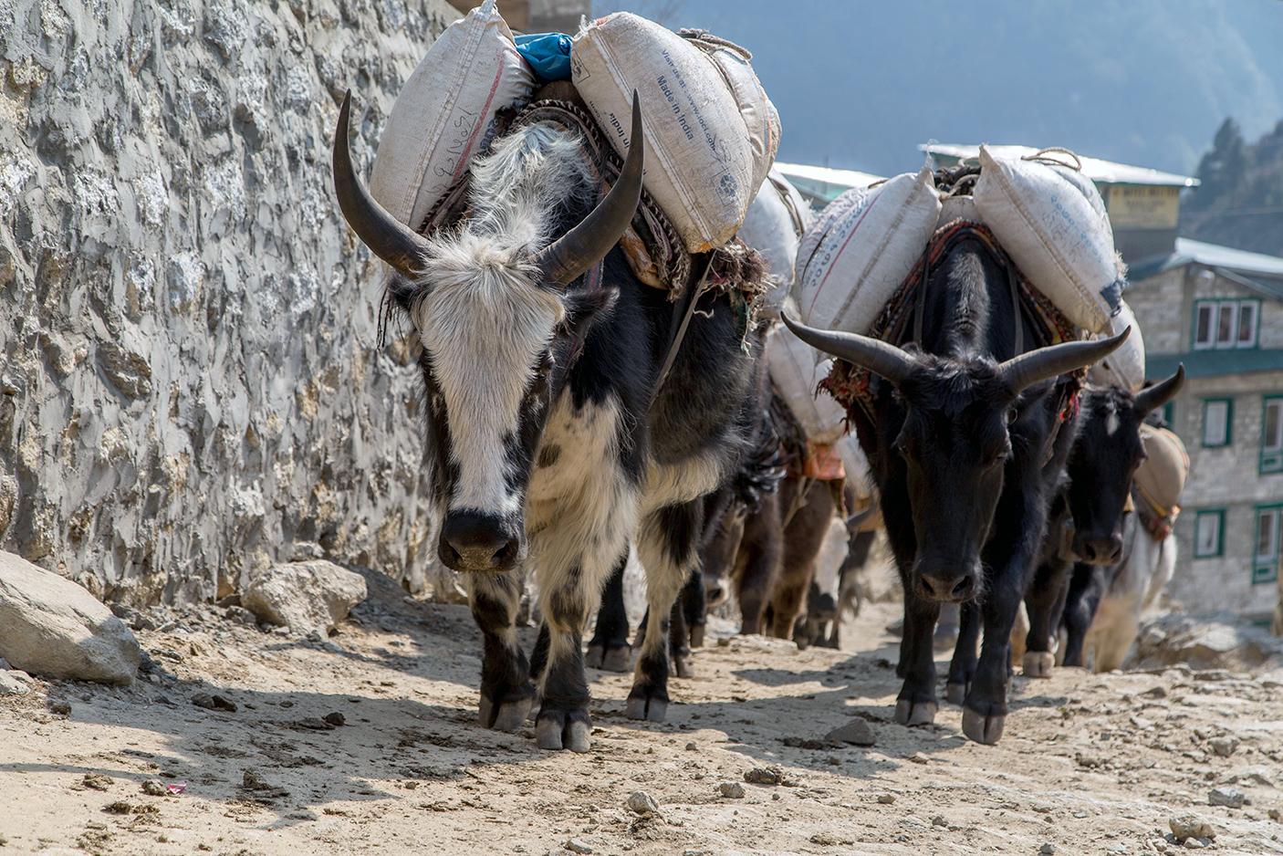 nepal 17.jpg