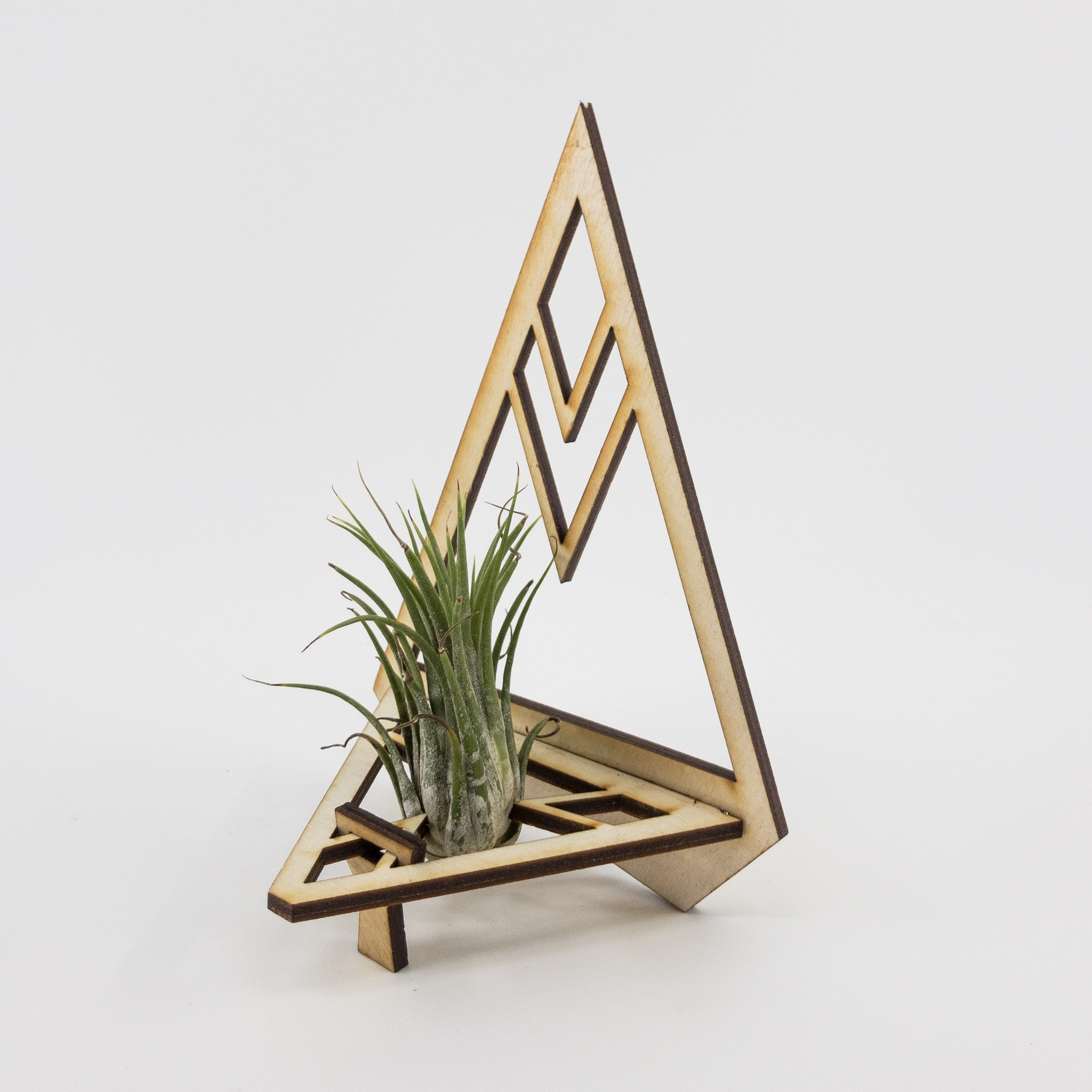 Shop Triangle Air Plant Holders Here