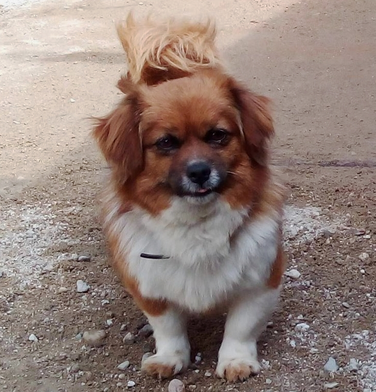 HONEY    f | 2 yrs | small   I was abandoned at the shelter with my litter of puppies. We arrived scared and confused but quickly began to trust the Sava's team. I get on really well with cats and dogs and love human attention!