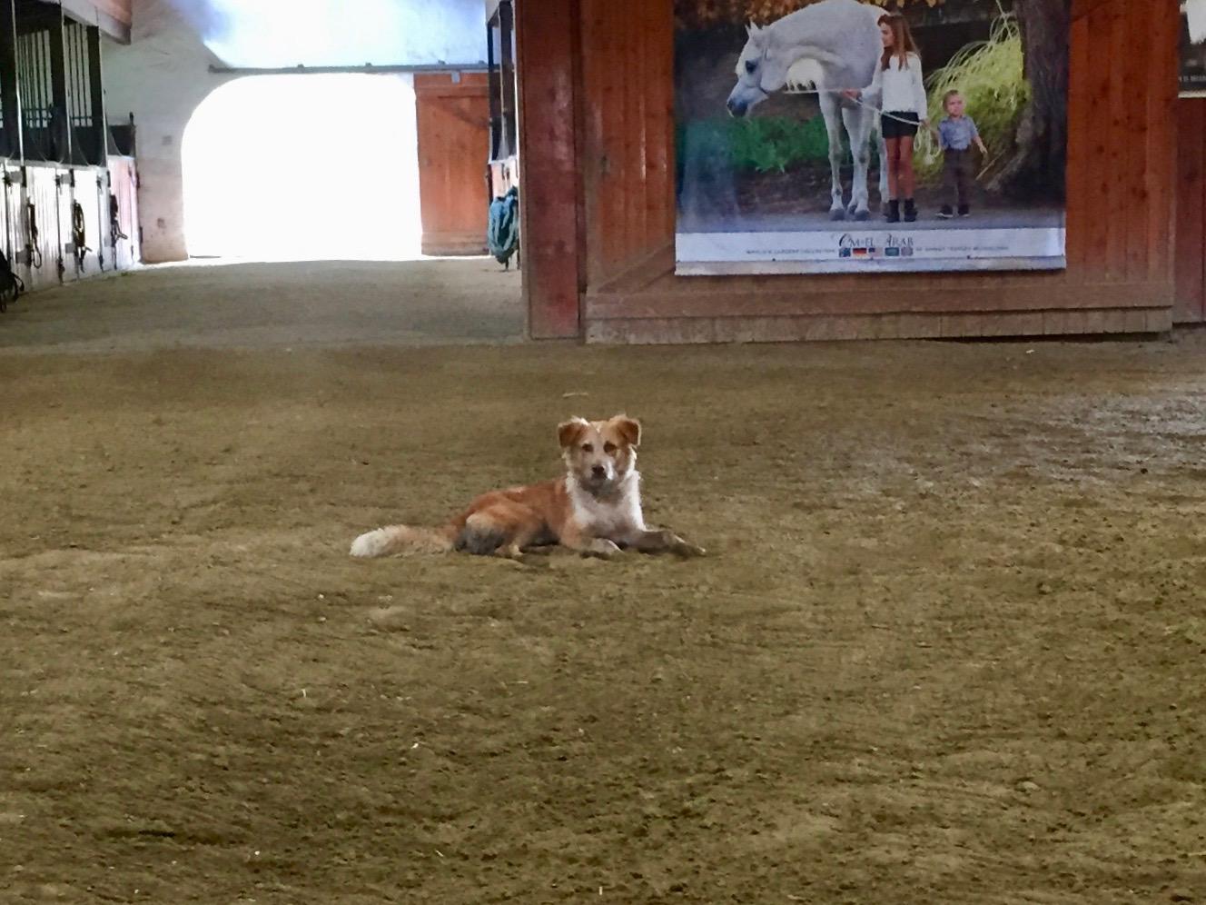 Barn Dog