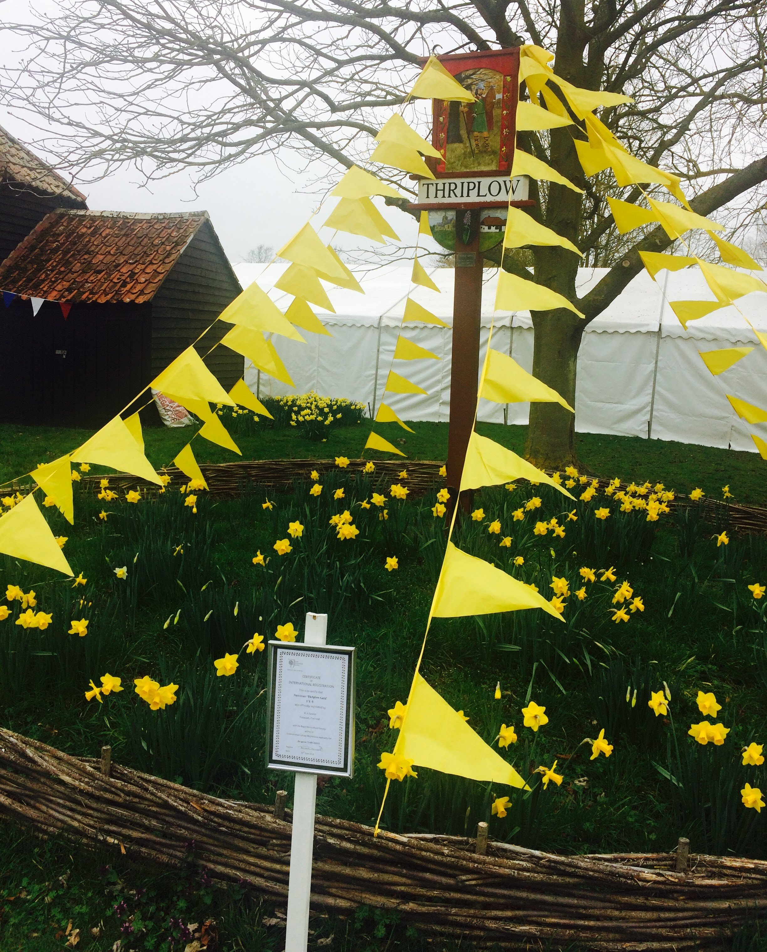A day at Daffodil Weekend, Thriplow, for some R&D with Snap Elastic