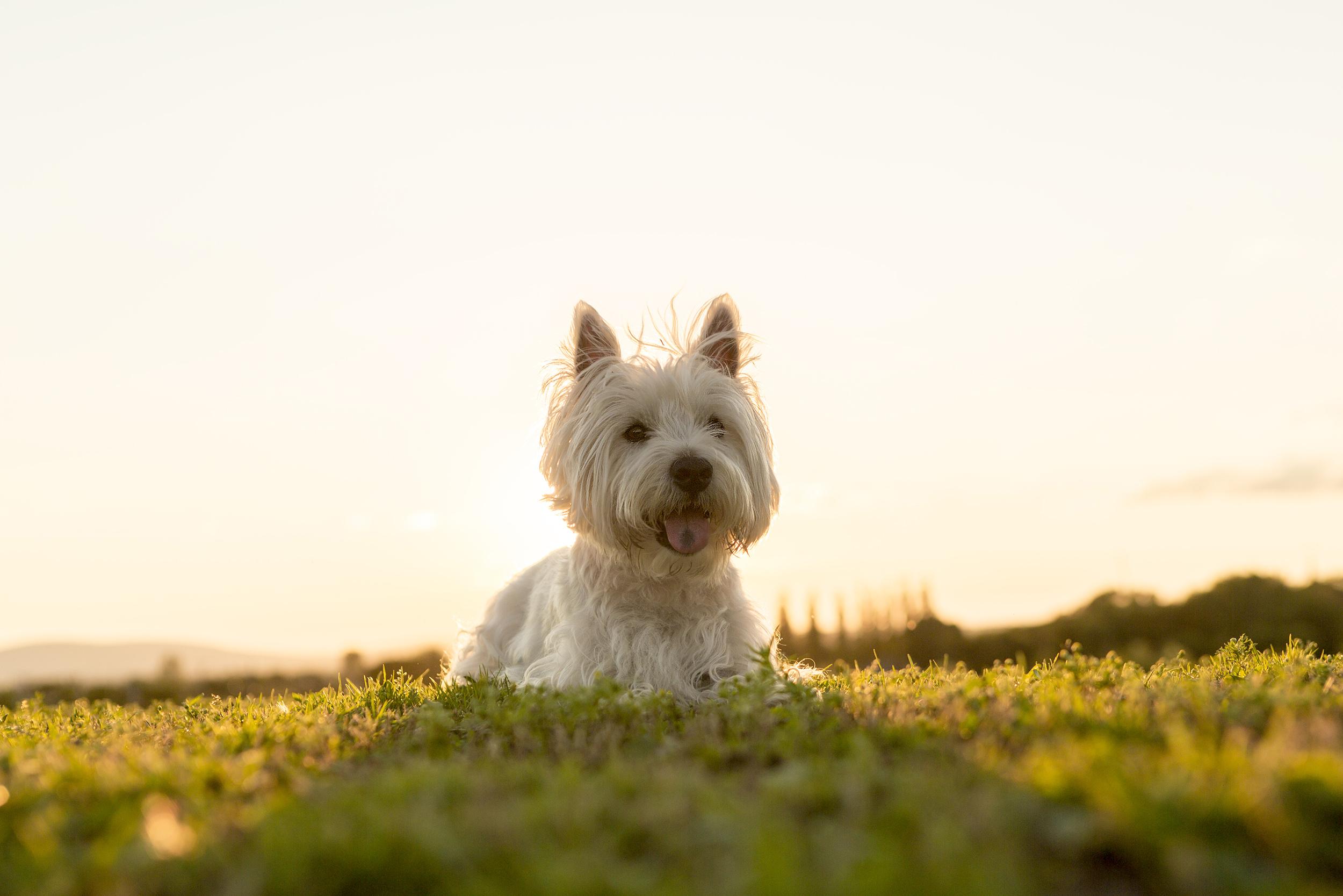 dog friendly hotels oregon coast