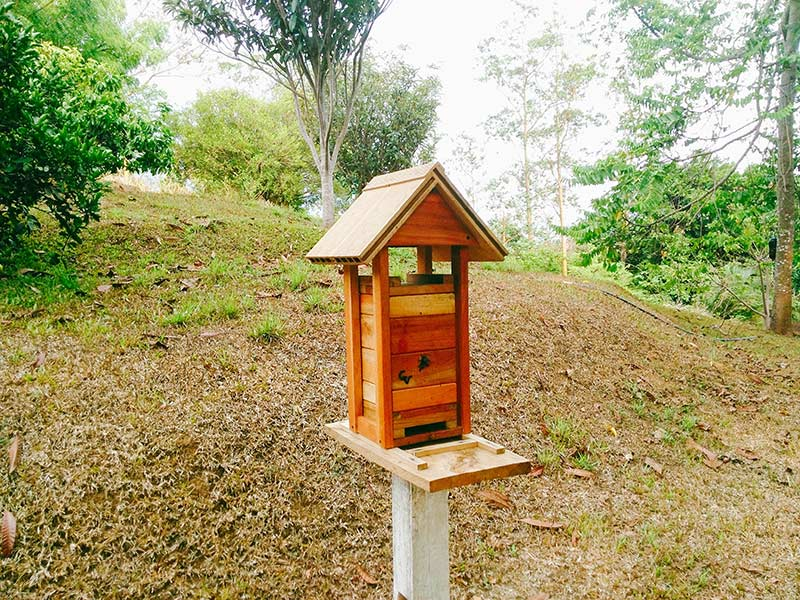 Colmena de Mariola criada en caja racional ubicada en la Garita de Alajuela.