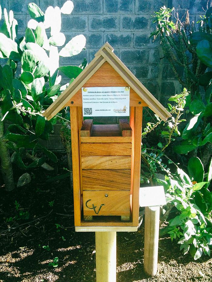 Colmena de Mariola en caja racional ubicada en los jardines de Hotel Bougainvillea.