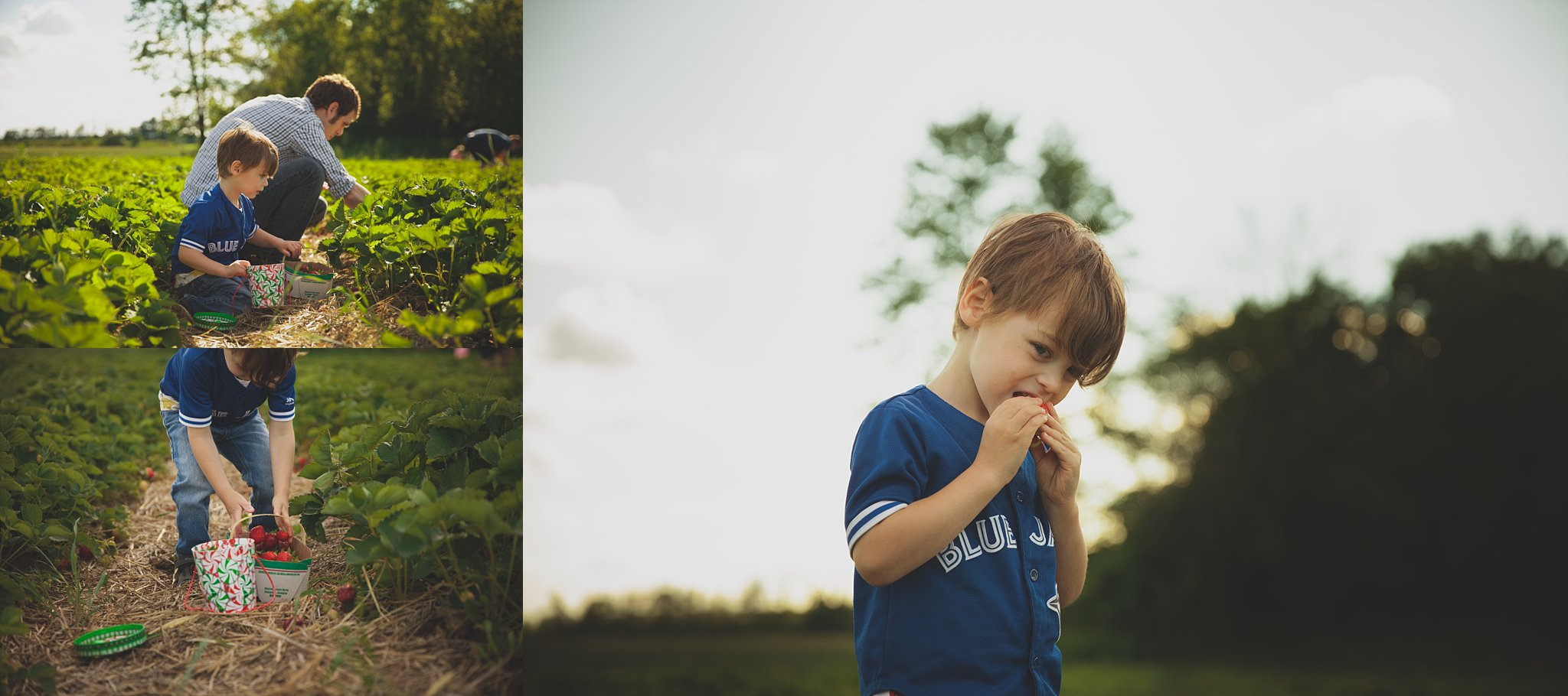 Boy showing off his harvest, and eating a strawberry from an Ontario You-Pick Farm in Innerkip.