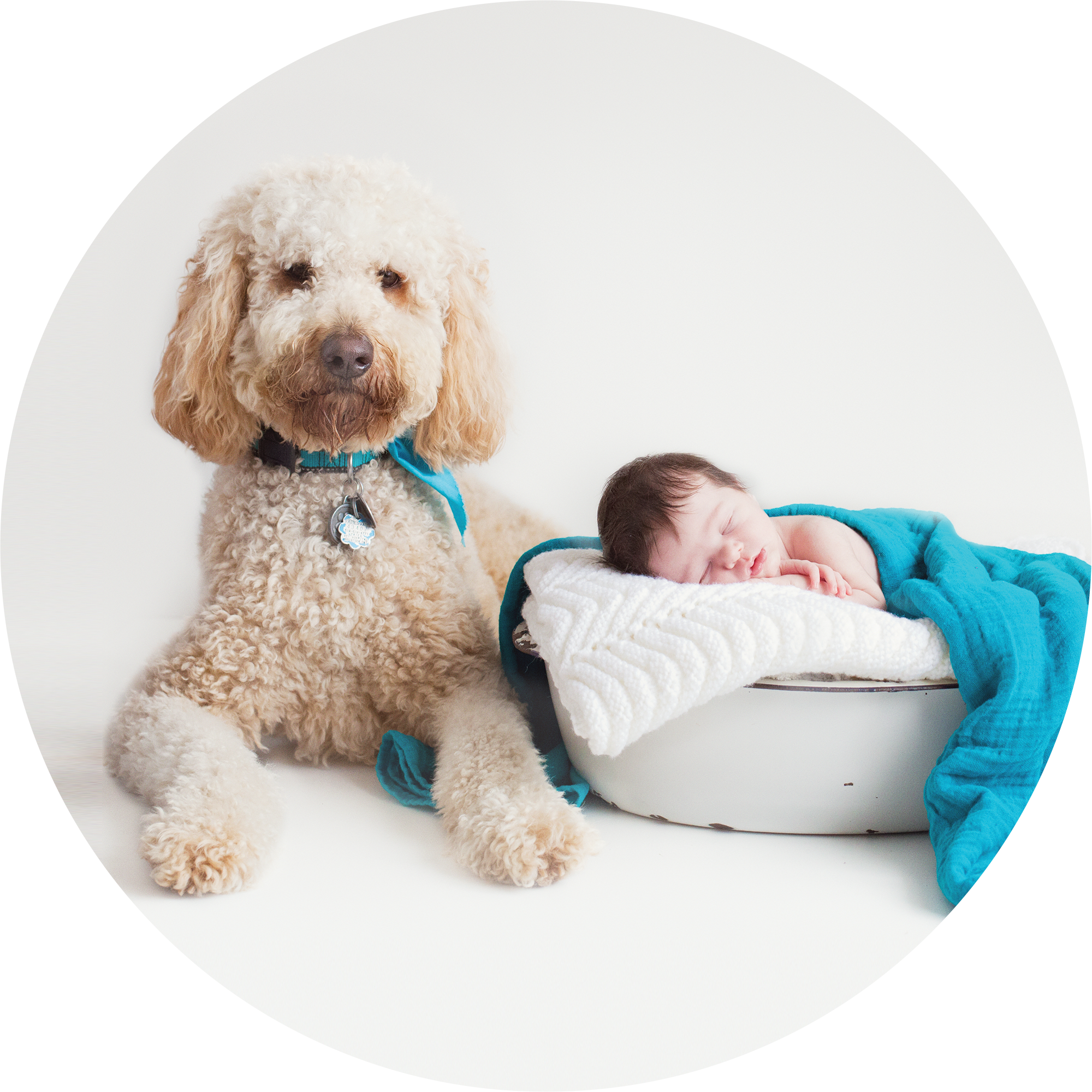 Newborn Baby girl with her goldendoodle dog. Taken by Rachael Little at Rachael Little Photography in Woodstock.